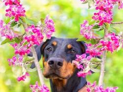 Hund_6